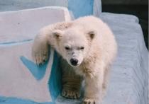Медвежонку  дали имя в честь директора зоопарка