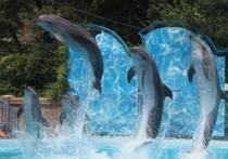 Как живут новосибирские дельфины?