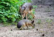В новосибирском зоопарке тропические животные принесли потомство