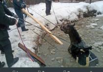 Хлестали ветками, били по ушам: детали спасения коня из пруда