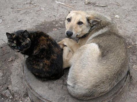 Дохлая собака не лает, не кусает… и не пахнет
