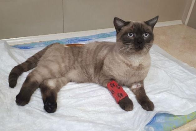 Новосибирцы спасли замерзающего покалеченного кота, вытащив его изсугроба